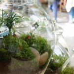 Le piante decorative e non solo