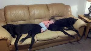 cani e divani