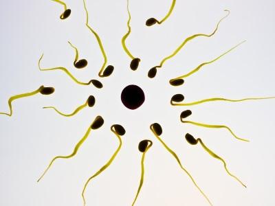 calcolo fertilità